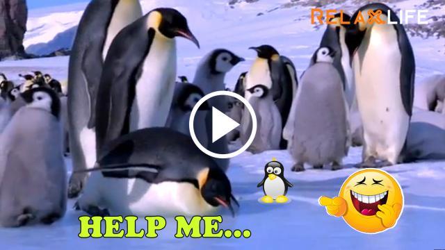Cuộc sống chim cánh cụt không như mong đợi