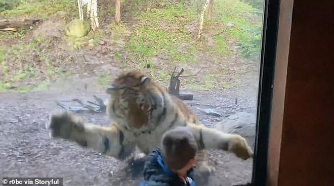 Cậu bé bất ngờ bị vồ trong sở thú, trải nghiệm nhớ đời