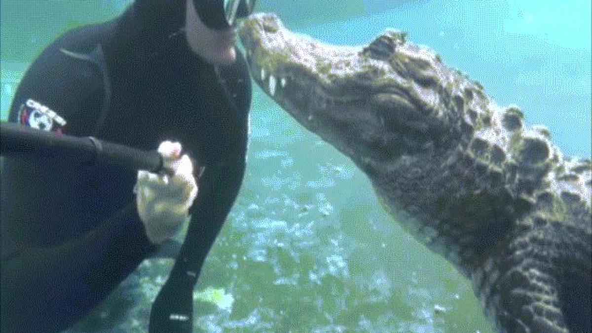 Nụ hôn của thợ lặn với cá sấu khiến mọi người đều khiếp sợ
