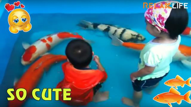 Đây là lý do bố mẹ luôn cấm bạn lại gần bể cá - Hài
