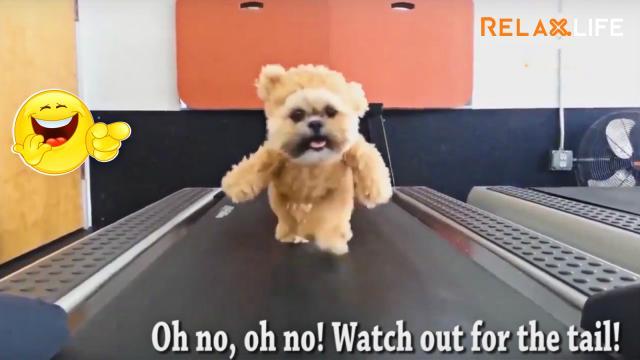 Hài hước thú cưng của bạn tập thể dục