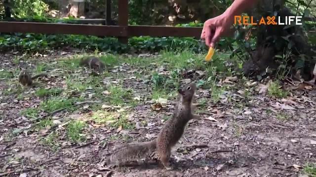 Chú sóc thông minh thích tận hưởng miếng snack 1 mình
