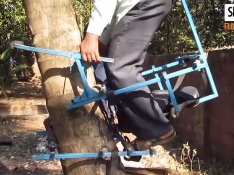 Cách nhanh nhất để leo lên một cây dừa