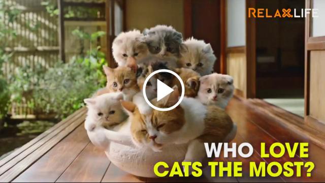 Hình tượng chú mèo Doremon rất có thể từ lý do yêu mèo vô đối của quốc đảo này